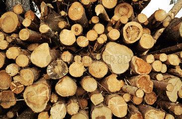 Holzstapel am Wegesrand  Schwarzwald