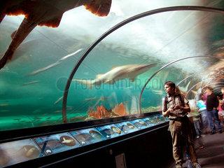 Australien  Sidney Aquarium