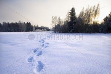 Fussspuren im Schnee