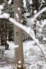 In Baumrinde geschnitztes Herz in Winterlandschaft