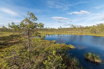 Hochmoor in Schweden  Hill Moor