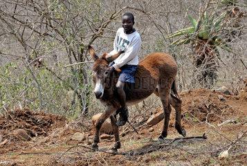 Suedliches Afrika: Junge auf einem Esel in Swasiland