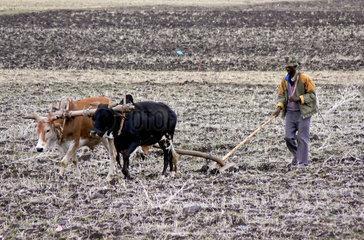 Aethiopischer Bauer mit Ochsengespann bei der Feldarbeit