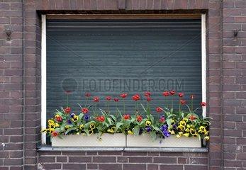 Blumenkaesten vor einem geschlossenen Fenster
