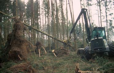 Holzerntemaschine in einem Windbruch bei Zusmarshausen