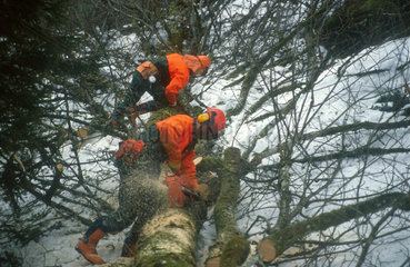 Holzfaeller in den Alpen bei Ruhpolding