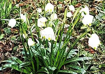 Schneegloeckchen Snowdrop pence neige