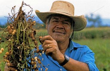 Mexikanischer Kleinbauer (Campesino) bei der Erdnussernte