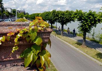 Rheinuferpromenade Bonn