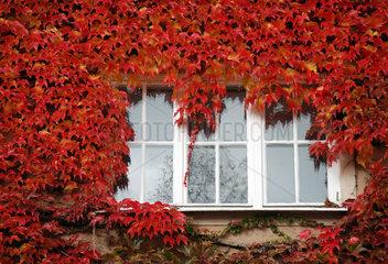 Fenster mit rotem Herbstlaub