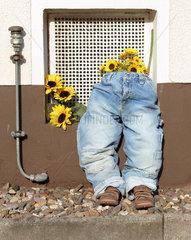 Improvisierte Skulptur aus Jeans und Sonnenblumen