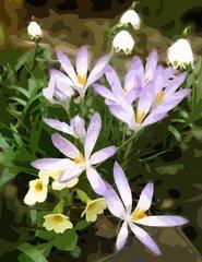 Fruehblueher Spring Flowers