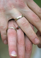 Buckow  Deutschland  Marienkaefer krabbelt ueber die Haende eines Brautpaares