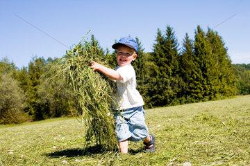 Kleiner Junge sammelt Heu