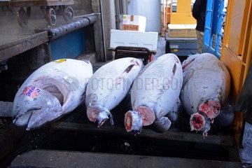 Tsukiji-Fischmarkt Tokio