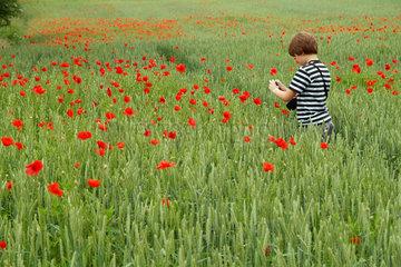 Junge im Getreidefeld fotografiert Mohnblumen