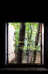 Fensterblick in den Wald