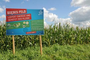 Maisfeld mit Informationstafel zu Biogas