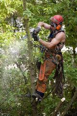 Berlin  Holzfaeller bei der Arbeit auf einem Baum in der Stadt