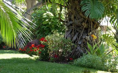 Madeira: Tropische Pflanzen in der Hotelanlage Quinta Splendida in Canico