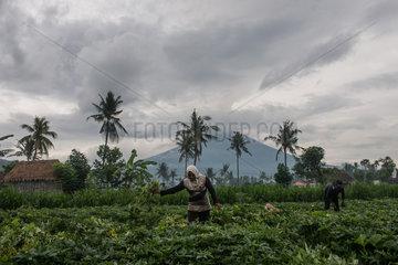 INDONESIA-BALI-MOUNT AGUNG ERUPTION