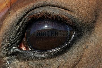 Goerlsdorf  das Auge eines Pferdes