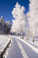 Winterlandschaft bei Bad Bayersoien