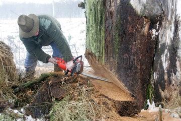 Prangendorf  Mann faellt einen Baum