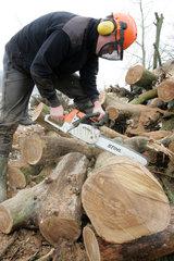Prangendorf  Mann zersaegt einen Baumstamm