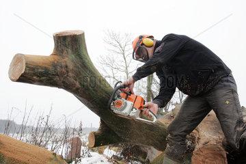 Prangendorf  ein Mann zersaegt einen Baumstamm