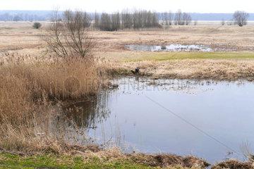 Auenlandschaft der Oder zwischen Frankfurt und Slubice