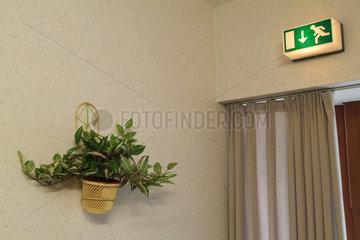 Hamburg  eine Efeupflanze in einem Topf