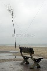 Norderney  Deutschland  Birkenstamm und Bank am Strand