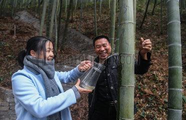 CHINA-ANJI-BAMBOO INDUSTRY(CN)