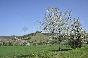 Blick auf Kirchberg und Schlossberg in Castell  Landkreis Kitzingen  Bayern  Deutschland