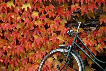 Herbstlaub mit Fahrrad