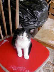 Kleine Katze auf einem roten Stuhl