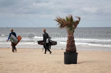 Holland  Bergen aan Zee  Palme und Kitesurfer am Strand