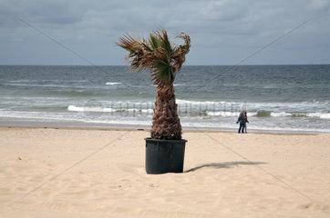 Holland  Bergen aan Zee  Palme und Menschen am Strand