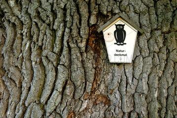 Kremmen  Tafel fuer Naturdenkmal an einer alten Eiche