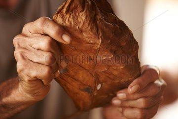 Kubanischer Zigarrenroller in Vinales