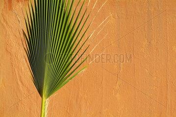 Palmwedel in Marokko