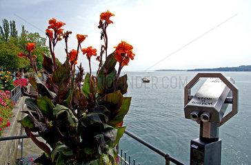 Blumen und Fernglas am Bodenseeufer