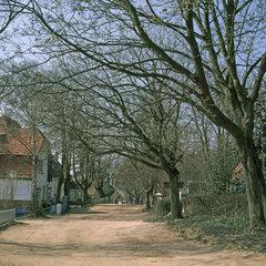 Strasse in Kloster auf Hiddensee  Mecklenburg-Vorpommern Deutschland