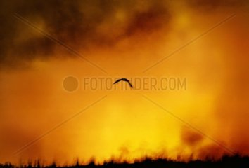 Urwald Brandrodung in Brasilien