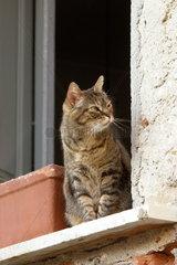 Hauskatze im Fenster