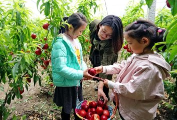 CHINA-HEBEI-AGRICULTURE-GREENHOUSES (CN)