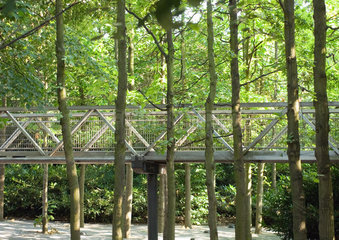 Elevated forest walkway