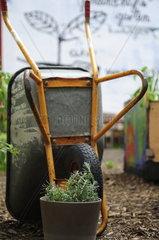 Urban Gardening. Lavendel
