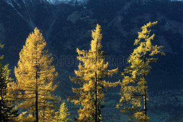 Sunlit trees with mountain and valley in background